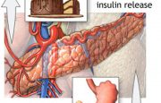 How Does Insulin Work Normally?