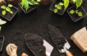 Diabetes and Gardening